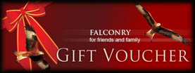 Huntly falconry Gift Vouchers